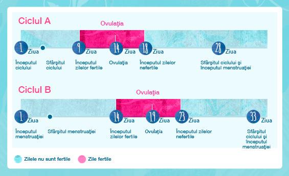 Ilustrație grafica al ciclului menstrual cu informații despre zile fertile.